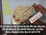 Cách chế biến và bảo quản hạt sen